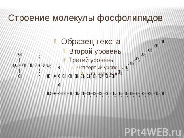 Строение молекулы фосфолипидов