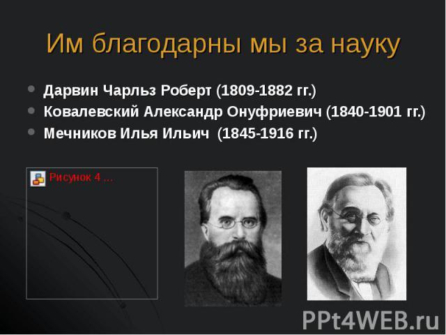 Дарвин Чарльз Роберт (1809-1882 гг.) Дарвин Чарльз Роберт (1809-1882 гг.) Ковалевский Александр Онуфриевич (1840-1901 гг.) Мечников Илья Ильич (1845-1916 гг.)