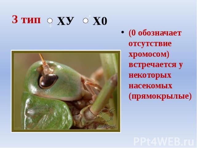 3 тип (0 обозначает отсутствие хромосом) встречается у некоторых насекомых (прямокрылые)