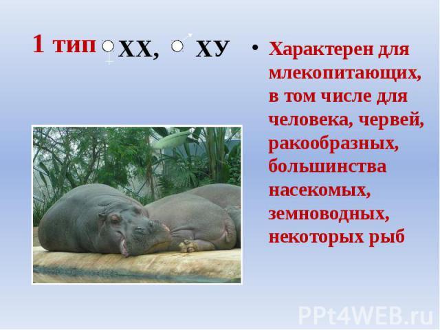 1 тип Характерен для млекопитающих, в том числе для человека, червей, ракообразных, большинства насекомых, земноводных, некоторых рыб