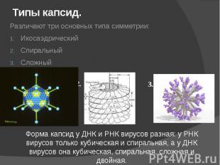 Типы капсид. Различают три основных типа симметрии: Икосаэдрический Спиральный С