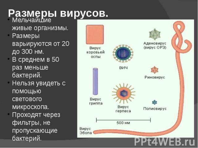 Размеры вирусов.