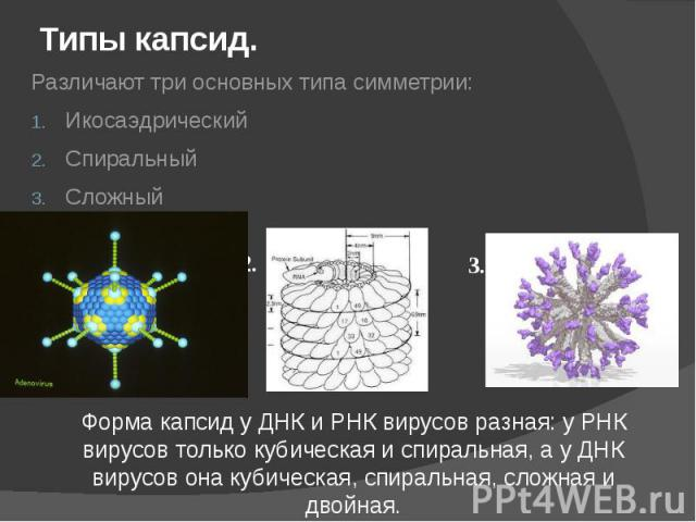 Типы капсид. Различают три основных типа симметрии: Икосаэдрический Спиральный Сложный
