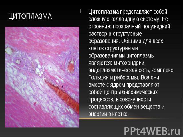 Цитоплазмапредставляет собой сложную коллоидную систему. Ее строение: прозрачный полужидкий раствор и структурные образования. Общими для всех клеток структурными образованиями цитоплазмы являются: митохондрии, эндоплазматическая сеть, комплек…