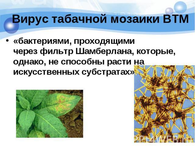 «бактериями, проходящими черезфильтр Шамберлана, которые, однако, не способны расти на искусственных субстратах» «бактериями, проходящими черезфильтр Шамберлана, которые, однако, не способны расти на искусственных субстратах»