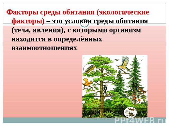 Факторы среды обитания (экологические факторы) – это условия среды обитания (тела, явления), с которыми организм находится в определённых взаимоотношениях Факторы среды обитания (экологические факторы) – это условия среды обитания (тела, явления), с…