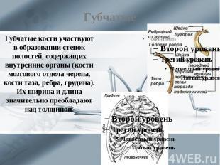Губчатые Губчатые кости участвуют в образовании стенок полостей, содержащих внут