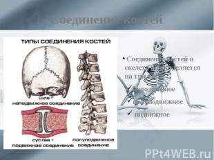 Соединение костей Соединение костей в скелете подразделяется на три типа: неподв
