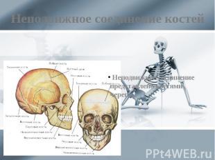 Неподвижное соединение костей Неподвижное соединение представлено костями черепа
