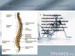 Полуподвижное соединение костей Полуподвижное соединение костей – соединением по