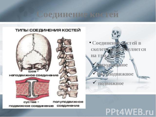 Соединение костей Соединение костей в скелете подразделяется на три типа: неподвижное полуподвижное подвижное
