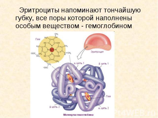 Эритроциты напоминают тончайшую губку, все поры которой наполнены особым веществом - гемоглобином Эритроциты напоминают тончайшую губку, все поры которой наполнены особым веществом - гемоглобином