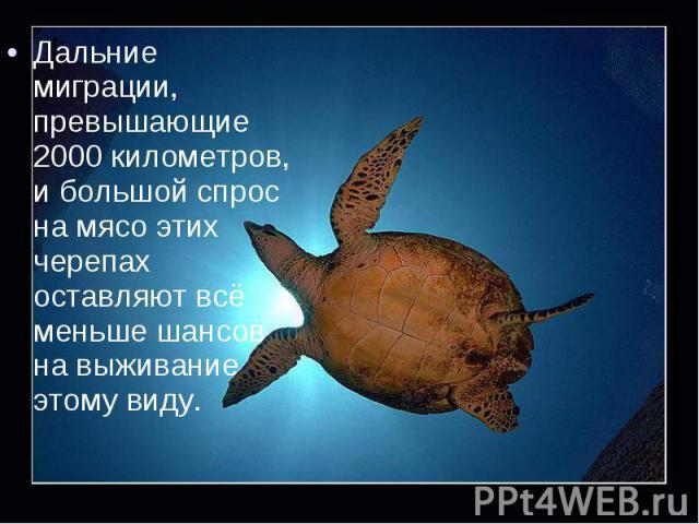 Дальние миграции, превышающие 2000 километров, и большой спрос на мясо этих черепах оставляют всё меньше шансов на выживание этому виду. Дальние миграции, превышающие 2000 километров, и большой спрос на мясо этих черепах оставляют всё меньше шансов …
