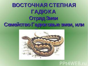 ВОСТОЧНАЯ СТЕПНАЯ ГАДЮКА Отряд Змеи Семейство Гадюковые змеи, или Гадюки