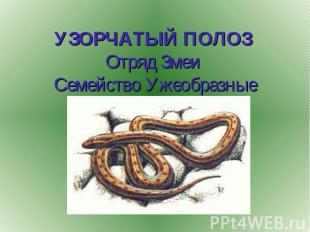 УЗОРЧАТЫЙ ПОЛОЗ Отряд Змеи Семейство Ужеобразные