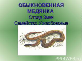 ОБЫКНОВЕННАЯ МЕДЯНКА Отряд Змеи Семейство Ужеобразные