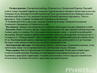 Распространение. Палеарктический вид. Встречается от Центральной Европы, Передне