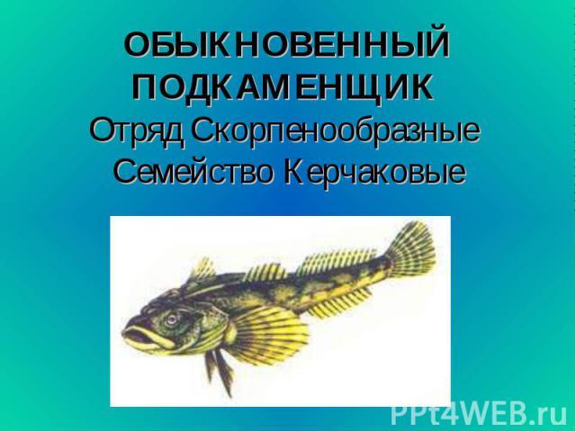 ОБЫКНОВЕННЫЙ ПОДКАМЕНЩИК Отряд Скорпенообразные Семейство Керчаковые