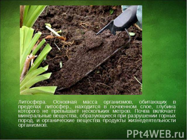 Литосфера. Основная масса организмов, обитающих в пределах литосфер., находится в почвенном слое, глубина которого не превышает нескольких метров. Почва включает минеральные вещества, образующиеся при разрушении горных пород, и органические вещества…