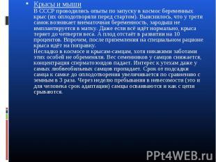 Крысы и мыши В СССР проводились опыты по запуску в космос беременных крыс (их оп