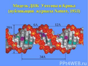 Модель ДНК Уотсона и Крика (публикация журнала Nature, 1953)