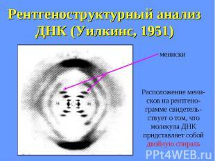 Рентгеноструктурный анализ ДНК (Уилкинс, 1951)
