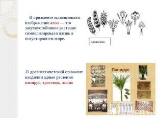В орнаменте использовали изображение алоэ — это засухоустойчивое растение символ