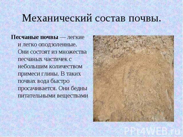 Механический состав почвы. Песчаные почвы — легкие и легко оподзоленные. Они состоят из множества песчаных частичек с небольшим количеством примеси глины. В таких почвах вода быстро просачивается. Они бедны питательными веществами
