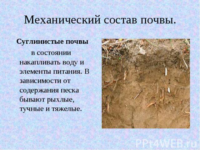 Механический состав почвы. Суглинистые почвы в состоянии накапливать воду и элементы питания. В зависимости от содержания песка бывают рыхлые, тучные и тяжелые.