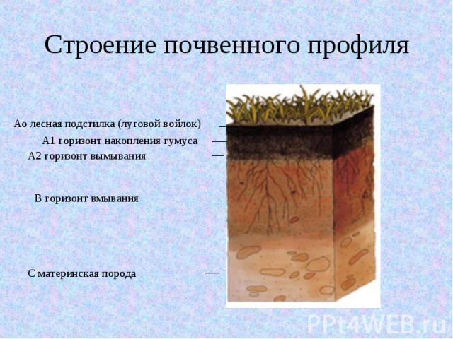 Строение почвенного профиля