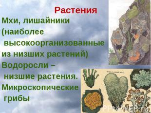 Растения Мхи, лишайники (наиболее высокоорганизованные из низших растений) Водор