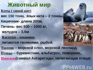 Животный мир Киты ( синий кит) вес 150 тонн, язык кита – 2 тонны, Кишечник- длин