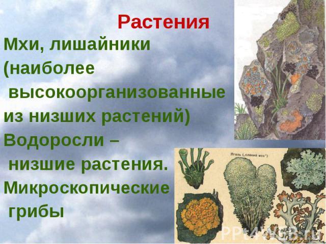 Растения Мхи, лишайники (наиболее высокоорганизованные из низших растений) Водоросли – низшие растения. Микроскопические грибы
