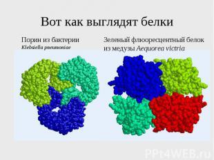 Вот как выглядят белки