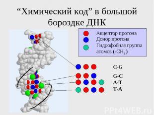 """""""Химический код"""" в большой бороздке ДНК"""
