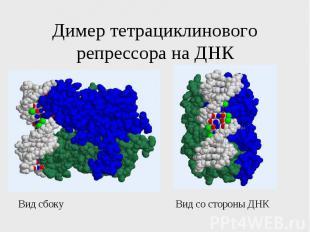 Димер тетрациклинового репрессора на ДНК