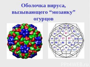 """Оболочка вируса, вызывающего """"мозаику"""" огурцов"""
