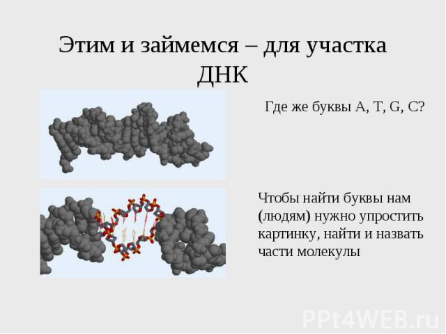 Этим и займемся – для участка ДНК