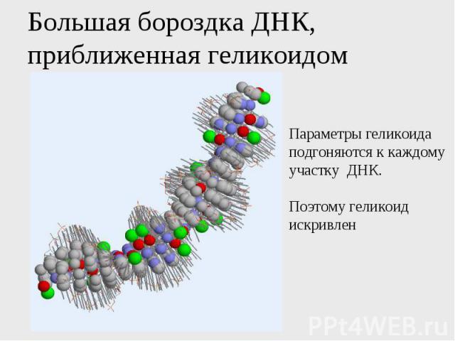 Большая бороздка ДНК, приближенная геликоидом