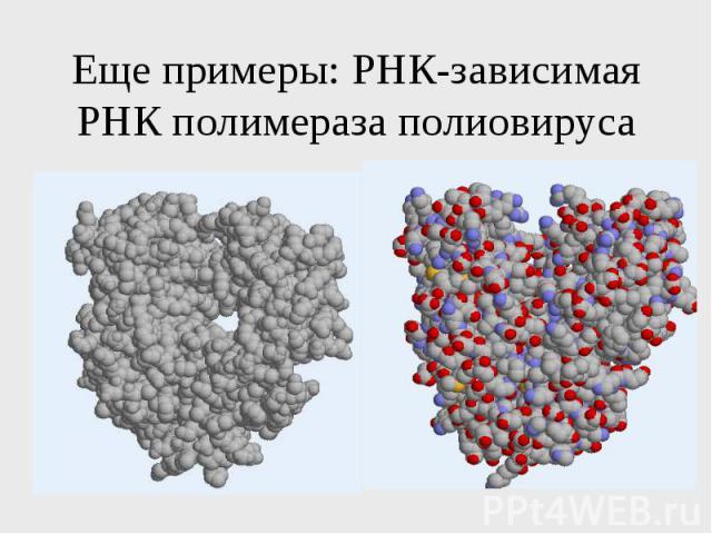 Еще примеры: РНК-зависимая РНК полимераза полиовируса