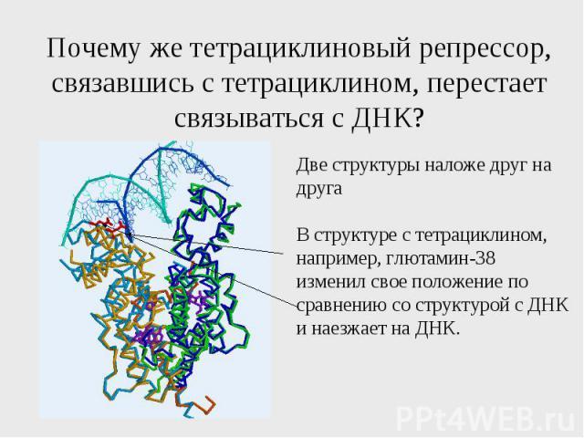 Почему же тетрациклиновый репрессор, связавшись с тетрациклином, перестает связываться с ДНК?