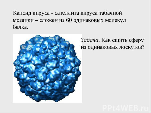 Капсид вируса - сателлита вируса табачной мозаики – сложен из 60 одинаковых молекул белка.