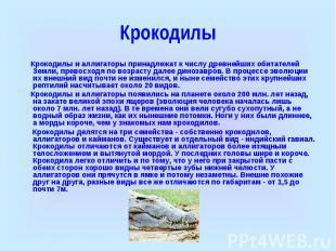 Крокодилы Крокодилы и аллигаторы принадлежат к числу древнейших обитателей Земли