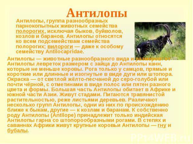 Антилопы Антилопы, группа разнообразных парнокопытных животных семейства полорогих, исключая быков, буйволов, козлов и баранов. Антилопы относятся ко всем подсемействам семейства полорогих; вилороги — даже к особому семейству Antilocapridae.