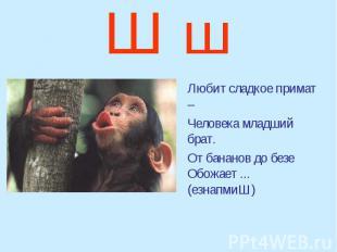 Ш ш Любит сладкое примат – Человека младший брат. От бананов до безе Обожает ...
