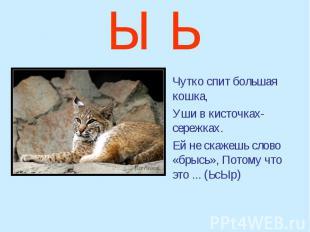Ы Ь Чутко спит большая кошка, Уши в кисточках-сережках. Ей не скажешь слово «бры