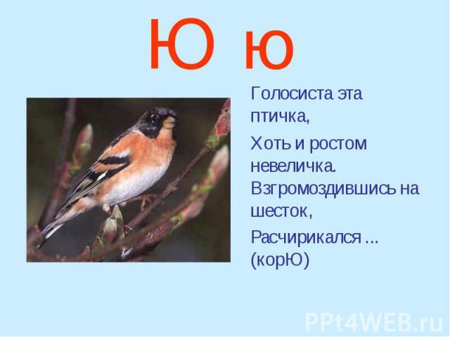 Ю ю Голосиста эта птичка, Хоть и ростом невеличка. Взгромоздившись на шесток, Расчирикался ... (корЮ)
