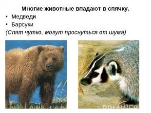 Медведи Медведи Барсуки (Спят чутко, могут проснуться от шума)