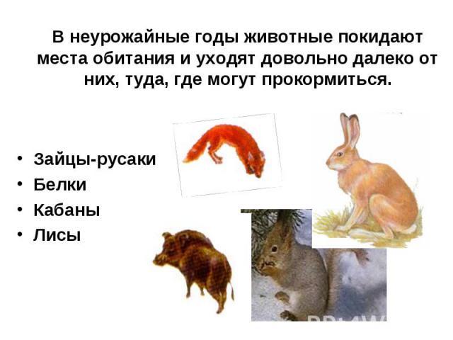 Зайцы-русаки Зайцы-русаки Белки Кабаны Лисы
