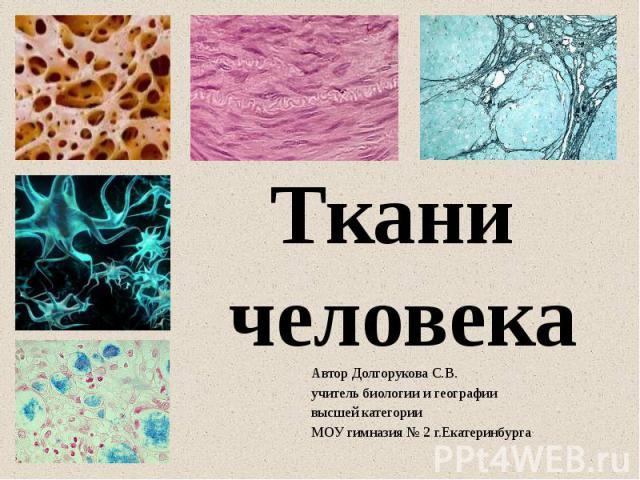 Автор Долгорукова С.В. учитель биологии и географии высшей категории МОУ гимназия № 2 г.Екатеринбурга